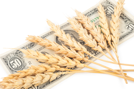 cash crop: Wheat ears and money