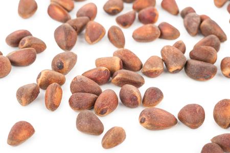 cone shell: Cedar pine nuts