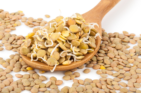 lentils: Sprouted lentils Stock Photo