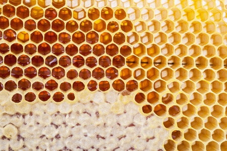 cluster house: Honeycomb background