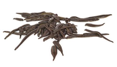 bloodsucker: Medical leeches Stock Photo