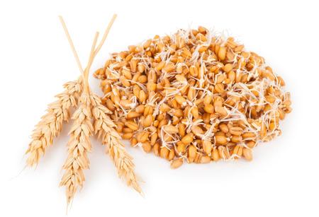 germinación: germen de trigo con los oídos Foto de archivo