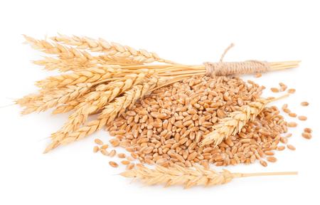 Ears of wheat and wheat grains 版權商用圖片
