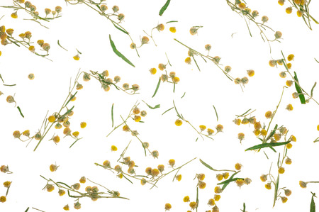 sagebrush: Sagebrush on white background Stock Photo
