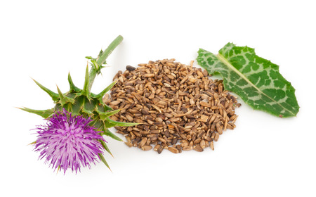 Silybum marianum (Milk Thistle).  Medical plants