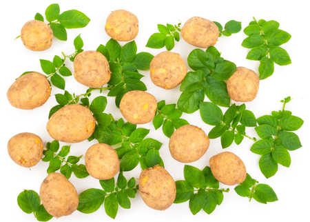 Yellow potatoes with leaves on a white Stock Photo