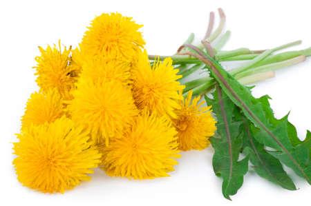 Dandelions on white background Stock Photo