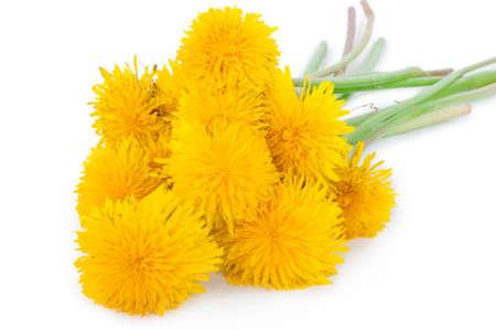 Dandelions on white background