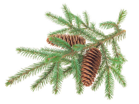 Fir cones with branches