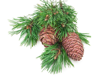 Cedar cones with branches Banco de Imagens
