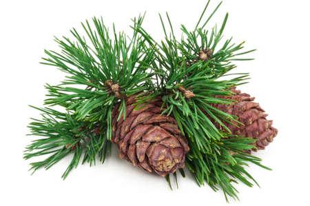 Cedar cones with branch on white Standard-Bild