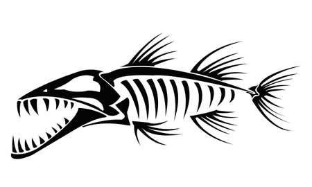Squelette Barracuda