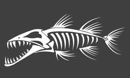 Barracuda skeleton on grey background, vector