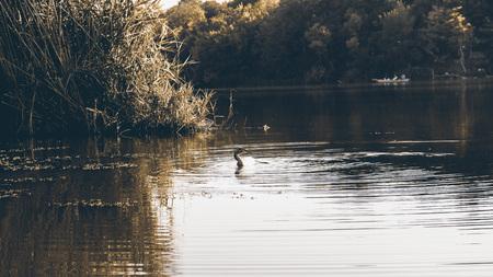preserve: Amazing view at the lake in Deliblato SerbiaNatural park Kraljevac Stock Photo