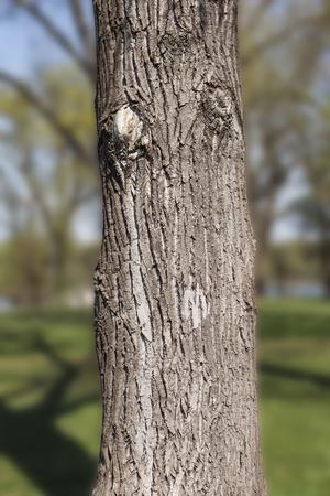 clavados: Tronco de árbol en el bosque