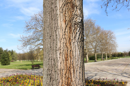 discolored: Tree trunk close up in the Park Stock Photo