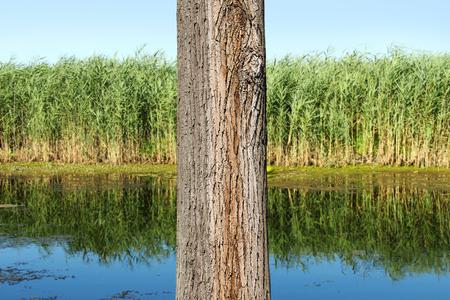 clavados: Tronco de árbol de cerca en la reserva natural
