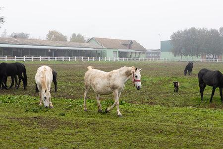 Beautiful Horses at farm on the pasture