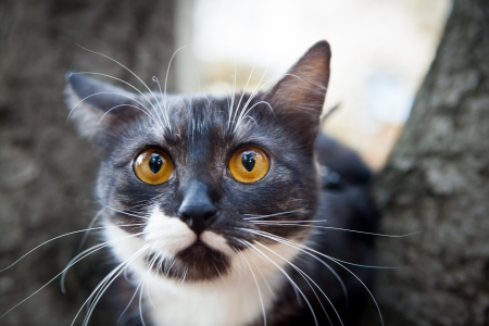 A scared cat on a tree  outdoor Reklamní fotografie