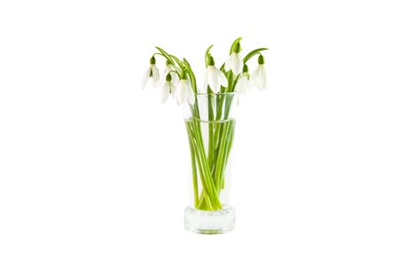 A bunch of snowdrops in tall shot glass photo