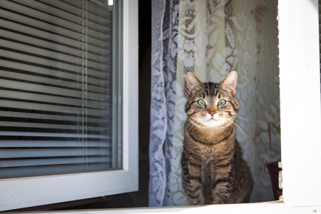 Cat sitting on a window with blinds photo