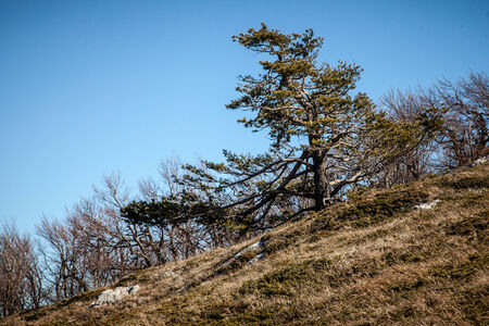 Early spring high in the Crimean mountains photo