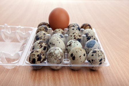 Quail eggs qith odd large hen egg in transparent plastic container on wooden kitchen table Stock Photo