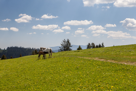 Horse colt on green pastures in mountains Stock Photo