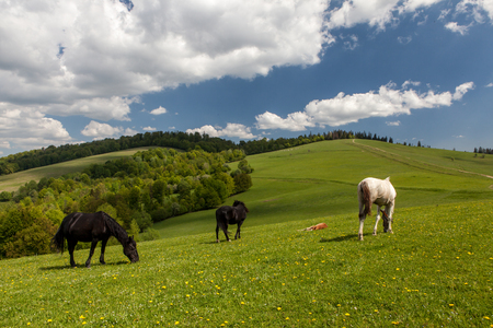 Herd of horses on green pastures in mountains
