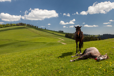 Herd of horses on green pastures in mountains Stock Photo - 80442263