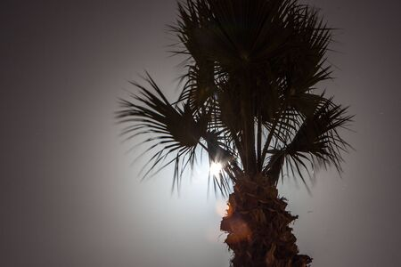 Tropic palm tree at night with moon light background