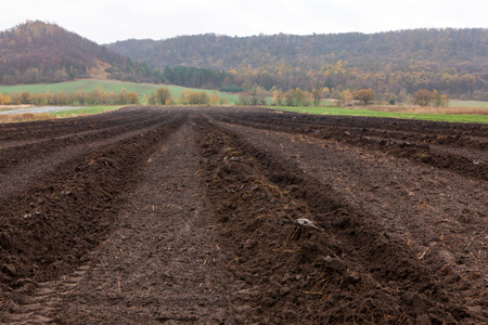 ploughed agriculture field cultivated and prepared for planting seedlings samplings