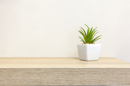 Succulent plant on book shelf with copyspace, room for text