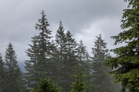 Dense fog over mountain meadow and European pine forest Standard-Bild - 108148735