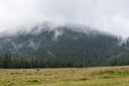 Dense fog over mountain meadow and European pine forest Standard-Bild - 108148737