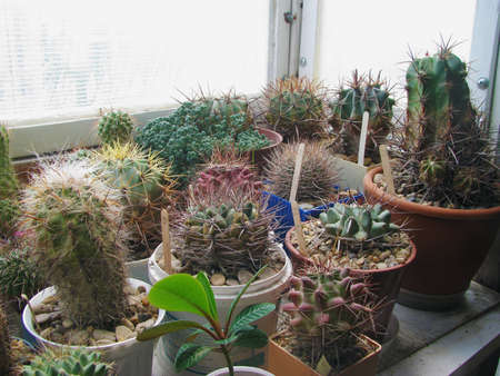 A collection of cacti and succulents, thorny beauties