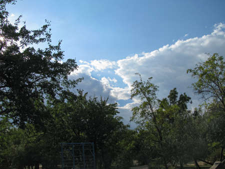 Beautiful blue sky and cumulus clouds over thickets of dense park greenery