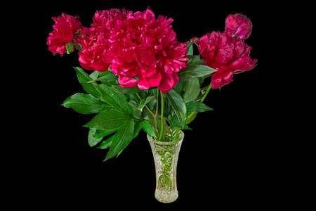 A Bouquet of Bright Red Peonies in A Crystal Vase. Isolated On Black Background