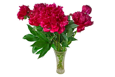 A Bouquet of Bright Red Peonies in A Crystal Vase. Isolated On White Background
