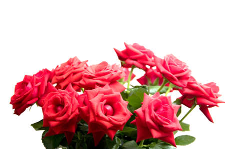isilated: Red roses isilated on white background Stock Photo