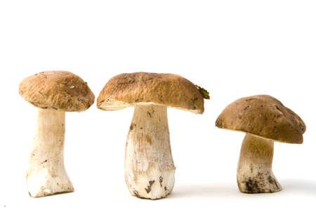 Three mushrooms on white background