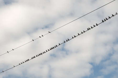 Birds (starlings and) on a wires in early autumn