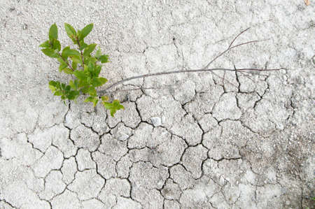 calcareous: Small willow on a limestone soil with cracks Stock Photo