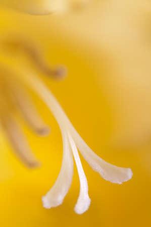glad: Glad flower fragment macro shot local focus