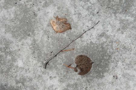 hojas antiguas: Signo de porcentaje - Las hojas viejas y espectáculo de fusión, cerca de disparo Foto de archivo