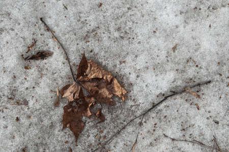 hojas antiguas: Las hojas viejas y espect�culo de fusi�n, cerca de disparo Foto de archivo