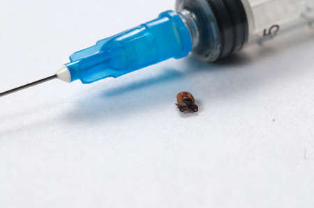 Mite and syringe tool macro shot local focus Stock Photo