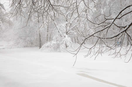 Winter landscape with a pond, Sokolniki park in Moscow, Russia, snowstorm Stock Photo