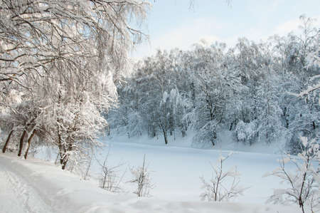 Winter landscape with a park  after snowstorm Stock Photo