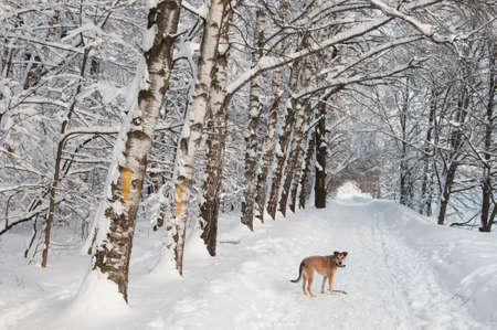 Sight of a dog in a winter landscape at a park after snowstorm Stock Photo